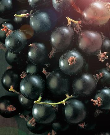Смородина ЯдрёнаяСмородина чёрная<br>Самый крупноплодный на сегодняшний день сорт черной смородины.<br>Действительно, Ядрёную с полным<br>основанием можно занести в Книгу<br>рекордов Гиннесса: плоды её размером с небольшую сливу массой 7,8 г.<br>