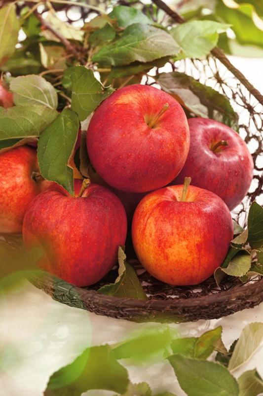 Яблоня Осеннее полосатоеЯблоня Осенние сорта<br>У него есть другое название — Штрейфлинг. Один из самых<br>популярных осенних сортов.<br>