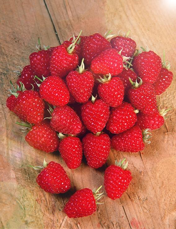 Малина ВольницаМалина красная<br>Куст среднерослый. Ягоды крупные, одномерные, ярко-красные<br>десертного вкуса. Зимостойкий, очень урожайный сорт.<br>Можно собрать с куста 4 кг отличных ягод.<br>