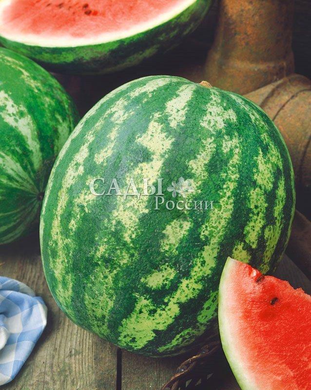 Арбузы Зенит F1Арбузы<br>В зависимости от уровня агротехники масса его плодов варьирует от 5<br>до 15 кг.<br>