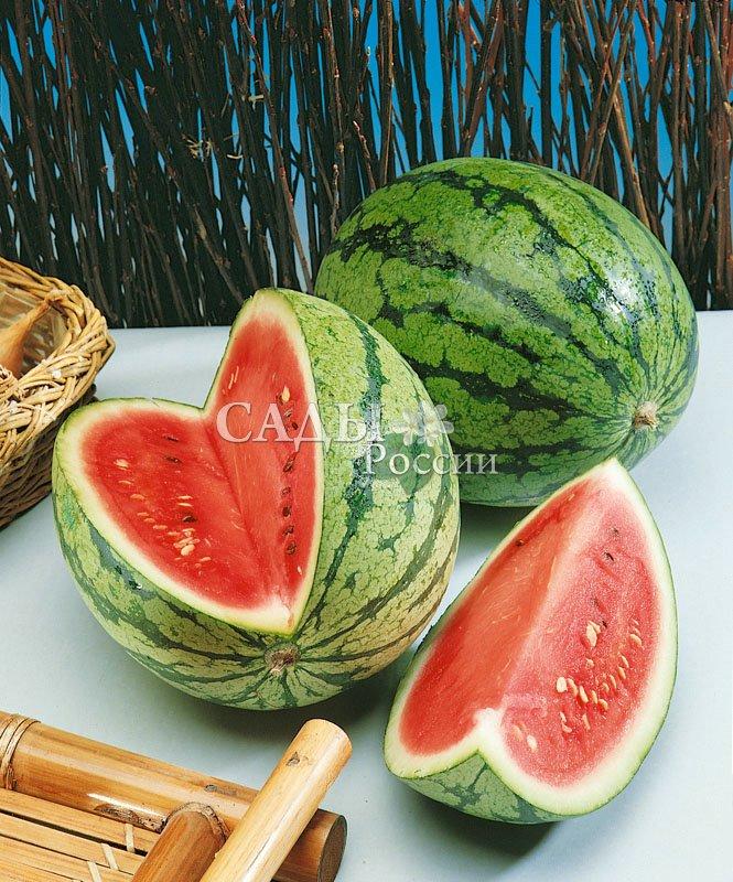 Арбузы Импульс F1Арбузы<br>Шаровидные и слегка удлинённые плоды яркой окраски станут визитной карточкой Вашего участка.<br>