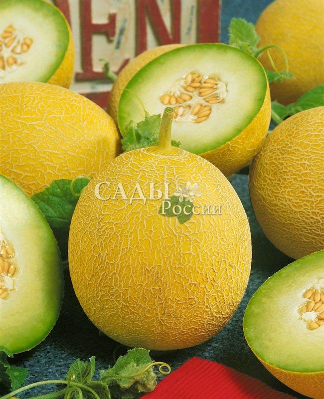 Дыни Идиллия F1Дыни<br>Называется так потому, что гармонично сочетает отличный вкус и<br>интересные внешние данные. Плоды шаровидной или слегка овальной<br>формы, гладкие и ровные.<br>