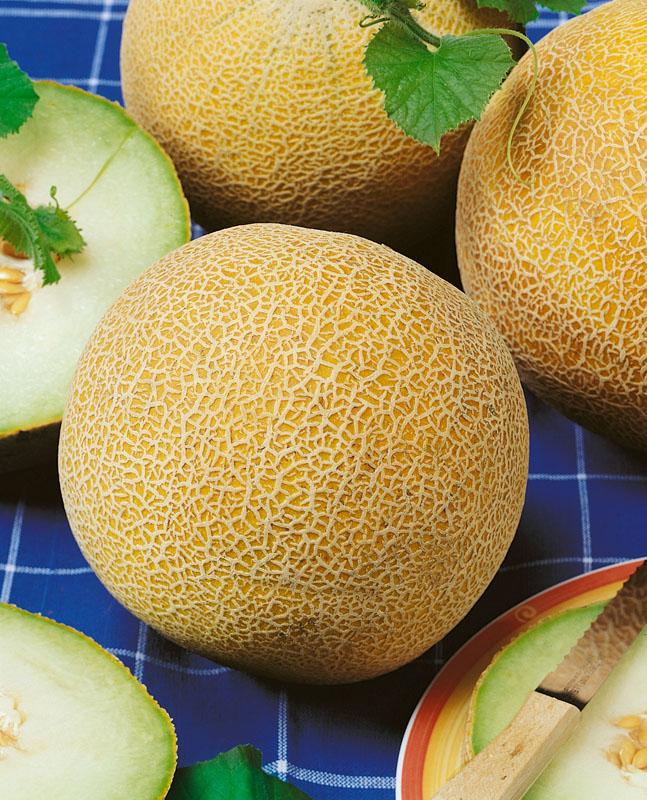 Дыни Осень F1Дыни<br>Плоды идеально круглые, слегка сегментированы. Главным достоинством дыни Осень являются, конечно, вкусовые качества.<br>