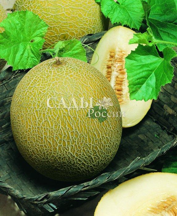 Дыни Солнечная F1Дыни<br>Этот сорт не обманет Ваших ожиданий. Плоды абсолютно правильной,<br>шаровидной формы. Их поверхность обычно гладкая, ярко-жёлтая.<br>