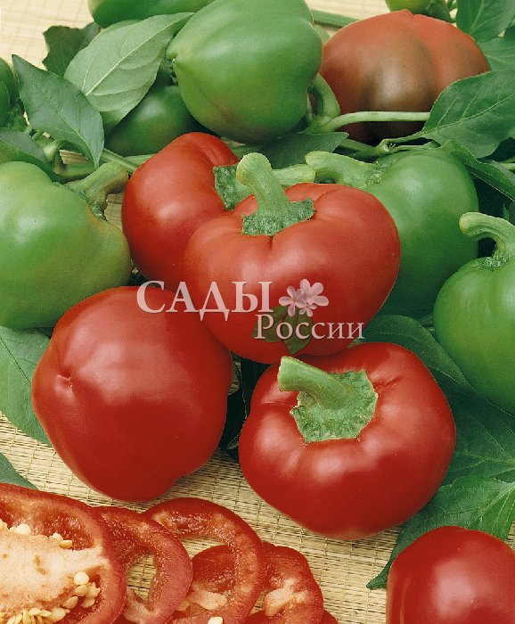 Перец Кипарис F1 сладкийПерец сладкий<br>До самой осени на красивом, высоком и ажурном кусте «Кипариса»<br>будут краснеть и тяжелеть сочные, рекордно мясистые плоды с толщиной<br>стенки 10 мм, с виду сильно напоминающие<br>упругие спелые помидоры.<br>