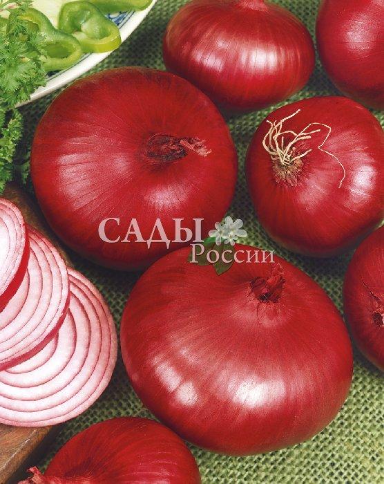 Лук Кондор F1 репчатыйЛук репчатый<br>Обладает великолепными вкусовыми качествами,<br>в хороший год все<br>луковицы достигают 400 г.<br>