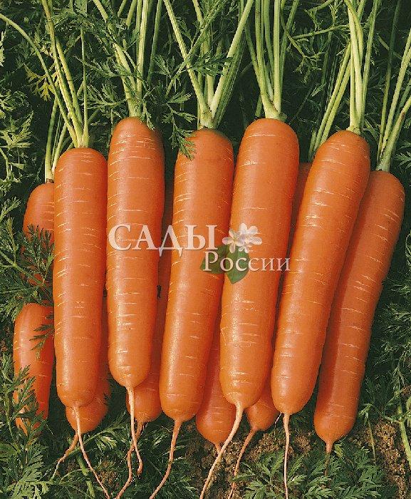 Морковь Корона F1Морковь<br>Среднепоздний. Корнеплоды<br>конической<br>формы, однородные,<br>крупные, длиной до 28 см.<br>