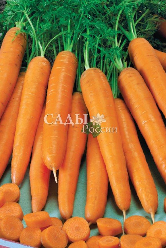 Морковь Принцесса F1Морковь<br>Среднепоздний. Корнеплоды конической формы, однородные, крупные,<br>длиной до 28 см. Окраска мякоти – светло-оранжевая. Предназначен<br>для длительного хранения. Очень высокое содержание каротина.<br>