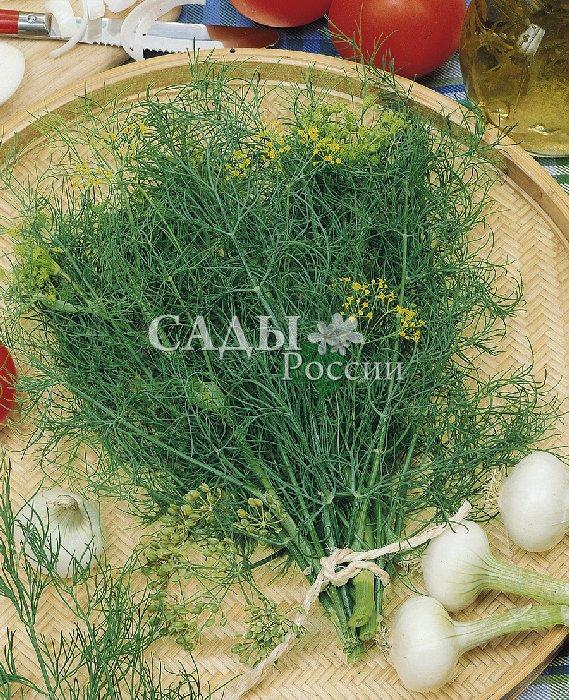 Укроп Амур F1Пряновкусовые травы<br>УКРОП С ОСОБЕННО СИЛЬНЫМ АРОМАТОМ.   Самый<br>ранний. Очень неприхотлив, устойчив к вредителям и болезням,<br>хорошо приспособлен для посева под зиму.<br>