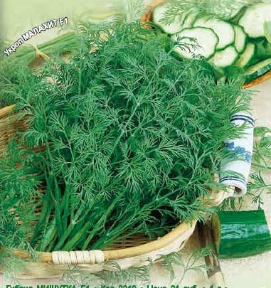 Укроп Малахит F1Пряновкусовые травы<br>Зелень яркая, сочная, пышная, нежная всё лето. Она не грубеет<br>ни в августе, ни в сентябре. Это совсем не тот укроп, что как<br>сорняк растёт в каждом огороде.<br>