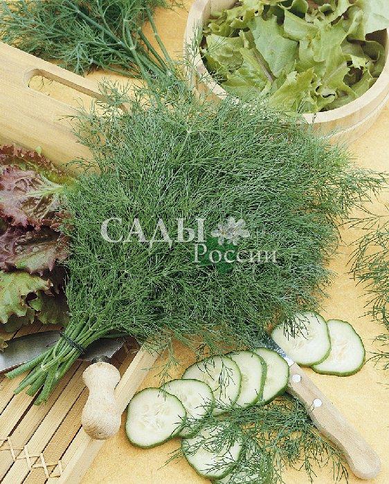 Укроп Мишутка F1Пряновкусовые травы<br>Селекция этого укропа была специально направлена на длительную <br>сохранность товарных качеств. Незаменим для фермеров<br>и садоводов, реализующих часть урожая на рынке.<br>