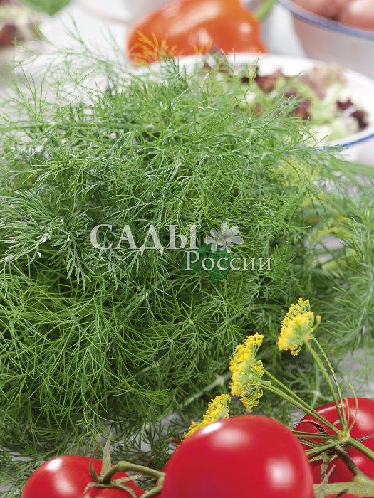 Укроп Фаворит F1Пряновкусовые травы<br>УКРОП С ОСОБЕННО СИЛЬНЫМ АРОМАТОМ.  Среднеранний, лист ярко-зелёный. Гибрид отличается высокой ароматичностью, быстро набирает зелёную массу и формирует урожай.<br>
