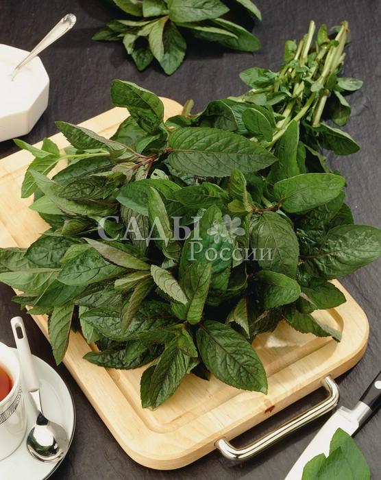 Мята ИзящнаяАптекарский огород<br>Эликсир<br>здоровья. Многолетнее лекарственное растение с освежающим<br>ароматом ментола.<br>