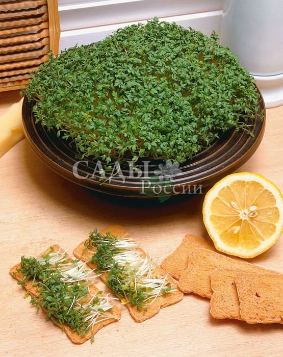 Салат Молния кресс F1Пряновкусовые травы<br>Самая первая зелень на участке – это наша Молния. Кладезь витаминов и<br>минеральных солей. Кресс-салат – культура поистине молниеносная.<br>