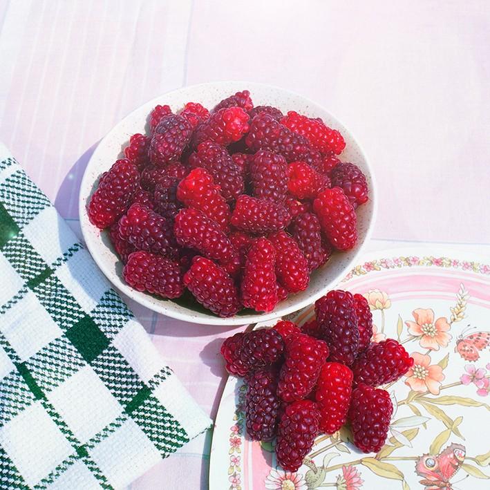 Малино-ежевичные гибриды СилванМалино-ежевичные гибриды<br>Малино-ежевичный гибрид Силван — один из лучших по вкусу. Ягоды<br>очень крупные весом 10—12 г каждая. В кисти содержится от<br>6 до 12 ягод.<br>