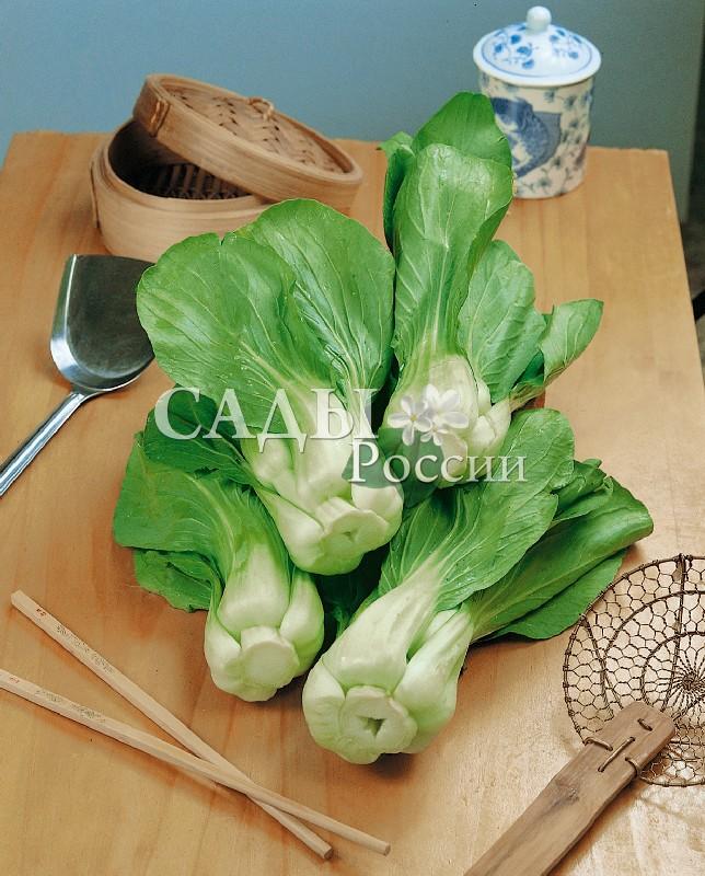Капуста Пак Чой F1 китайскаяКапуста китайская<br>Великолепная листовая капуста со множеством витаминов и минеральных веществ. По питательной ценности близка к белокочанной капусте.<br>