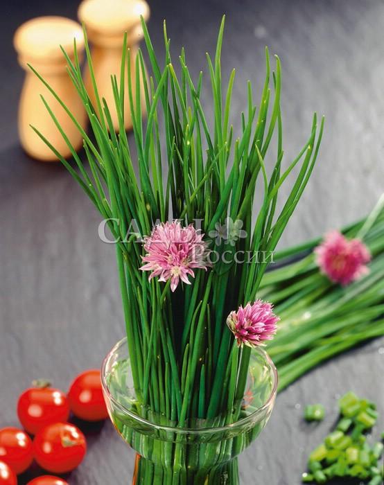 Лук Медонос шниттМалораспространенные культуры<br>Медонос, первые весенние витамины. Нежная, не очень острая<br>сочная зелень тонких длинных перьев как нельзя кстати ранней<br>весной.<br>