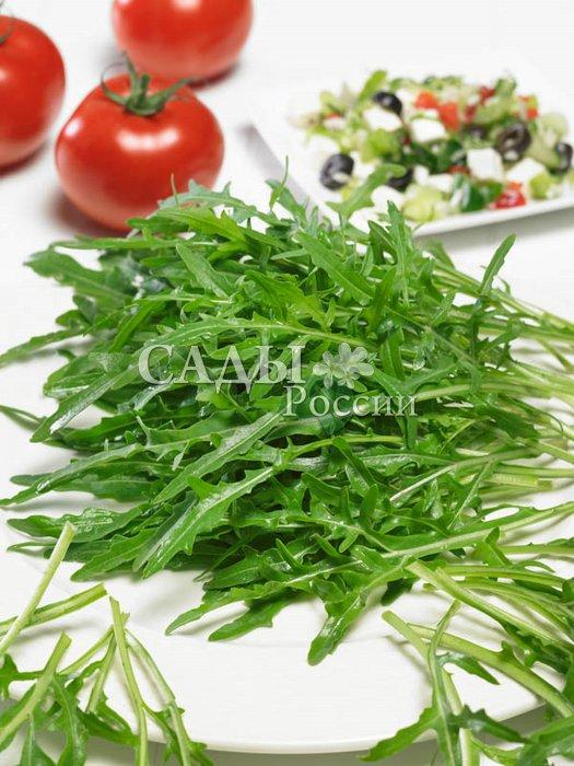 Рукола РезнаяПряновкусовые травы<br>Легко превратит обычный обед в праздничную трапезу. Ценится за ореховый привкус с лёгкой<br>горчинкой.<br>