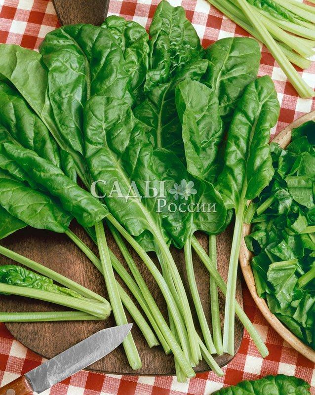 Свёкла Мангольд ИзумрудМалораспространенные культуры<br>Мангольд, листовая свёкла — салатный овощной деликатес.<br>Вкусный, полезный, урожайный и раннеспелый.<br>