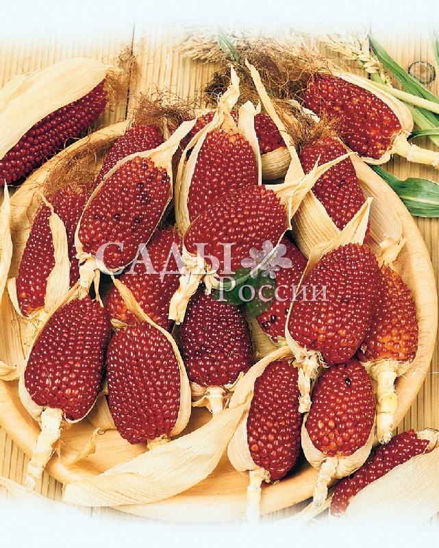 Кукуруза Земляничная декоративнаяОднолетники<br>И вовсе оригиналка. Початки похожи на крупные ягоды земляники, рубиново-красные с мелкими зёрнами.<br>