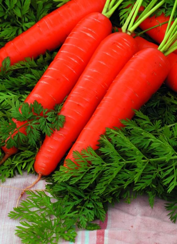 Морковь Нантик Резистафлай F1Морковь-Чудо<br>Яркий представитель известного сортотипа Нантская. Среднеспелый,<br>от полных всходов до технической спелости 90—100 дней.<br>