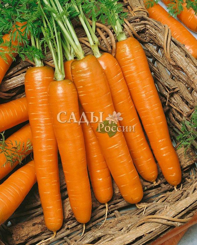 Морковь Романс F1Морковь-Чудо<br>Элегантный и изысканный среднеспелый гибрид с очень красивыми, выровненными по форме цилиндрическими корнеплодами насыщенной интенсивно-оранжевой однородной окраски.<br>