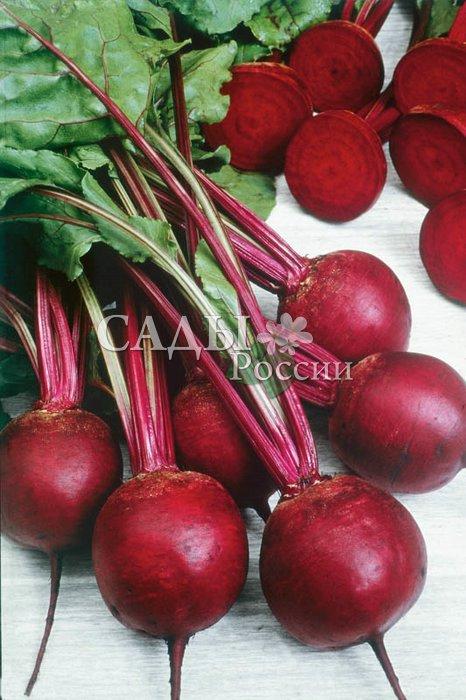 Свёкла Кестрел F1Свёкла-Чудо<br>Стандарт качества и высокой урожайности.<br>