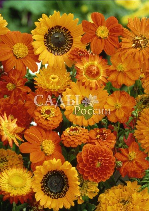 Набор Оттенки оранжевогоОднолетники<br><br>