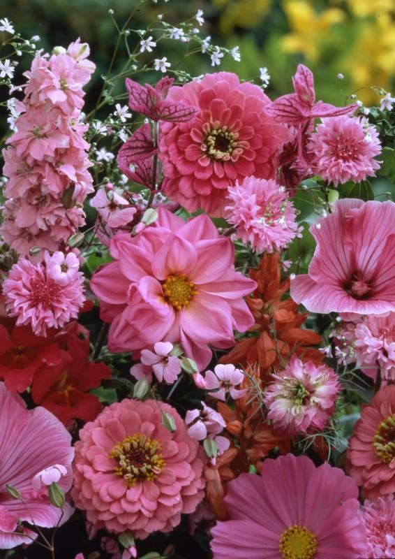 Набор Оттенки розовогоОднолетники<br><br>