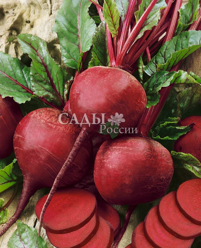 Свёкла Ларка F1Свёкла-Чудо<br>Изящный и элегантный «порционный» среднеспелый сорт с тёмно-красными красивыми гладкими и округлыми корнеплодами средних<br>размеров (140—300 г).<br>