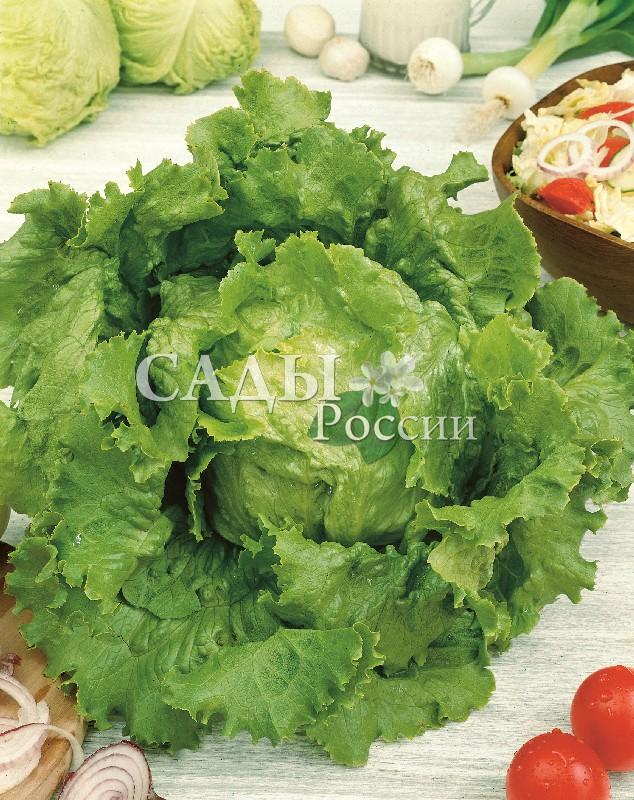 Салат Робинзон F1Пряновкусовые травы<br>НОВИНКА!  <br><br>Салат насыщенного зелёного цвета,<br>с привлекательными волнистыми краями.<br>