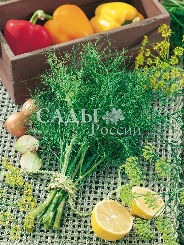 Укроп Мораван F1Пряновкусовые травы<br>НОВИНКА!  <br><br>Невероятно щедрый и суперароматный позднеспелый гибрид.<br>