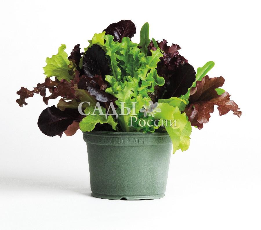 Салат Альфреско F1 смесьДомашний огород<br>НОВИНКА!  <br><br>Почувствовать себя итальянским фермером позволит вам маленький огород<br>зелёных салатов на вашем балконе.<br>