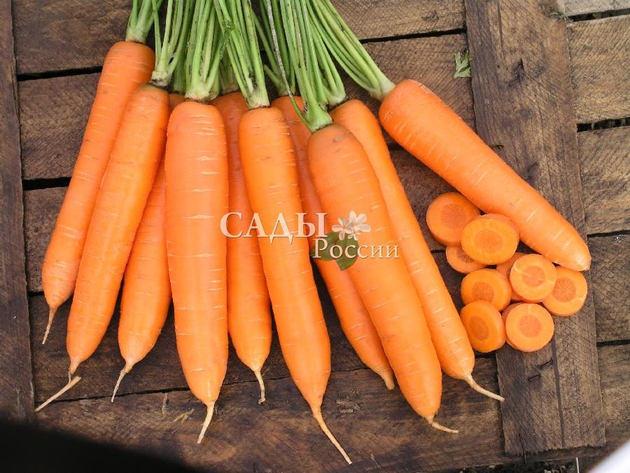 Морковь Сиркана F1Морковь<br>Энергичный, выносливый и урожайный гибрид раннего срока<br>созревания, от всходов до уборки 90 дней.<br>