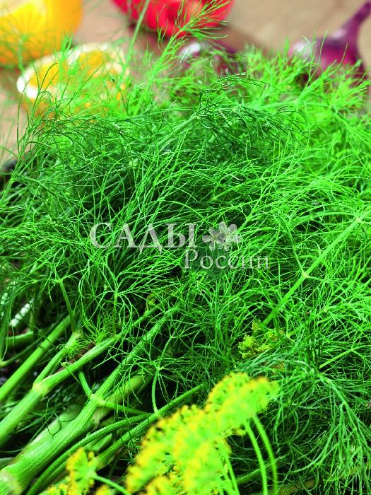 Укроп Гладиатор F1Пряновкусовые травы<br>Очень ароматный<br>позднеспелый<br>сорт не оставит без свежей зелени.<br>