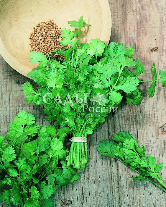 Кориандр МариноПряновкусовые травы<br>Среднеспелый сорт, от всходов до начала хозяйственной<br>годности<br>40—45 дней.<br>