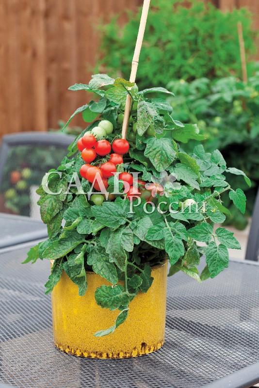 Помидоры Малиновое кружево F1Домашний огород<br>НОВИНКА!  <br><br>Томаты этого гибрида могут стать альтернативой балконным цветам.<br>