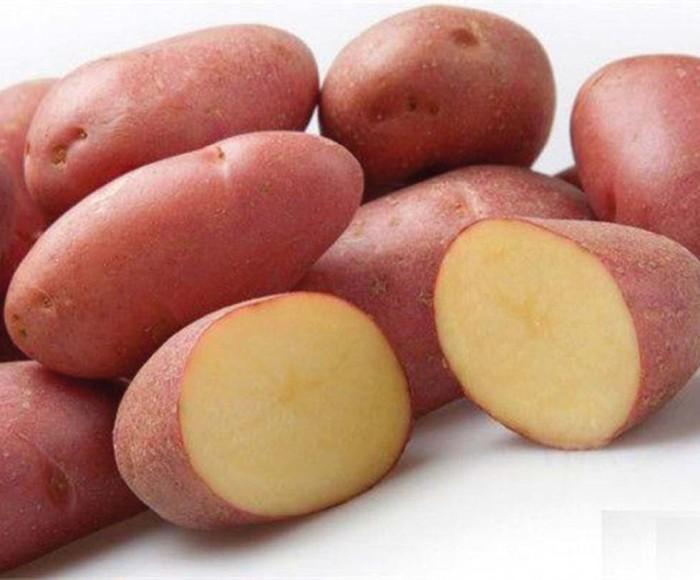 Картофель РозалиндСреднеспелые сорта картофеля<br>У нового немецкого сорта обоснованные амбиции по экспансии на поля картофелеводов российских регионов.<br>