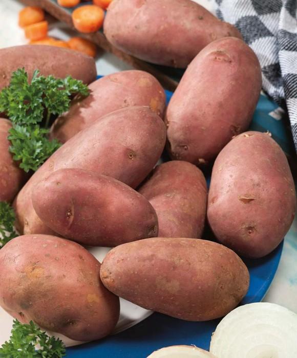 Картофель РокоСреднеспелые сорта картофеля<br>Среднеспелый сорт, полное созревание через<br>80-90 дней, со стабильной урожайностью до 4 кг/м2.<br>