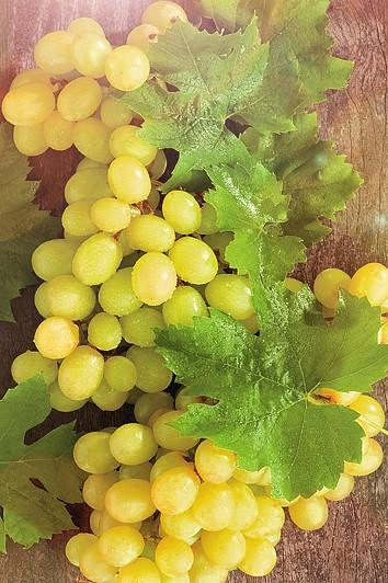 Виноград СуперэкстраВиноград<br>Новый сорт-сказка, созревает очень рано (через 95-105 дней после распускания первой почки), ягоды крупные, средней массой 7-10 г.<br>