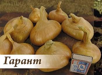Лук ГарантЛук семейный крупный<br>Луковицы округло-плоские, яркого жёлтого цвета. Масса стандартной луковицы – до 60 г.<br>