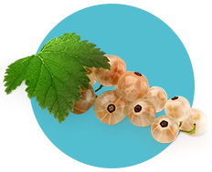 Как вырастить белую смородину
