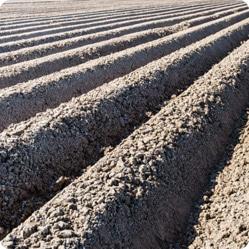Как посадить картофель: посадка в гребни