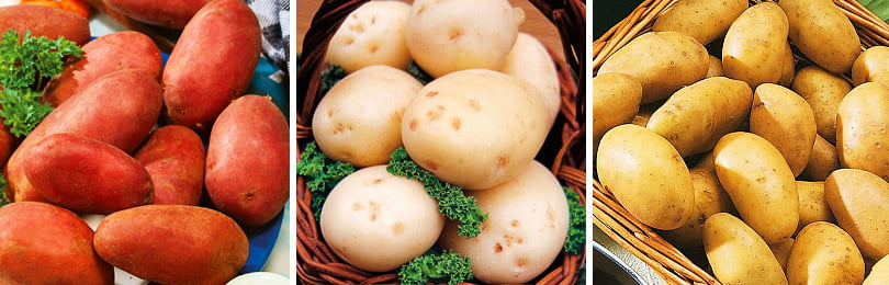 Какие сорта картофеля посадить на своем участке?
