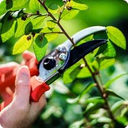 Как обрезать плодовые деревья: советы для начинающих