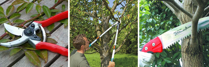 Чем обрезать плодовые деревья?