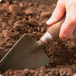 Сроки посева семян на огороде