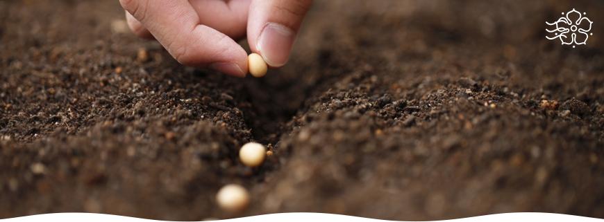 Готовим семена к посеву на рассаду- этапы и способы