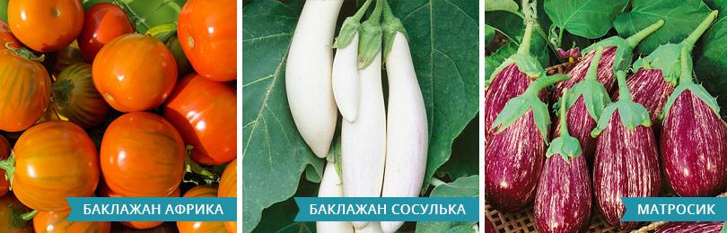 20.03_Statya6_Baklazhany_810h260_vnutr-stati-dlinnaya1.jpg