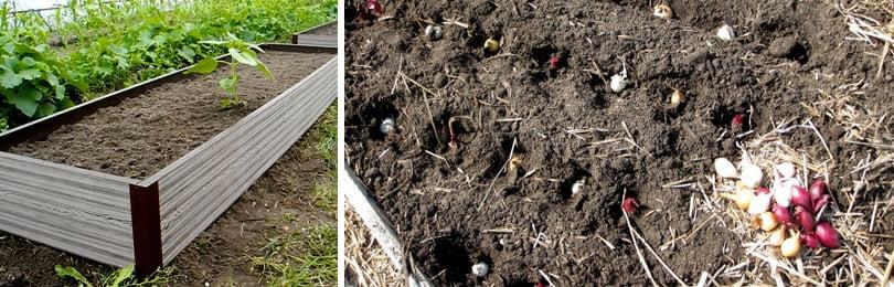 Подзимний посев проводят только в ясную погоду. Семена высевают сухими без какой-то предварительной обработки